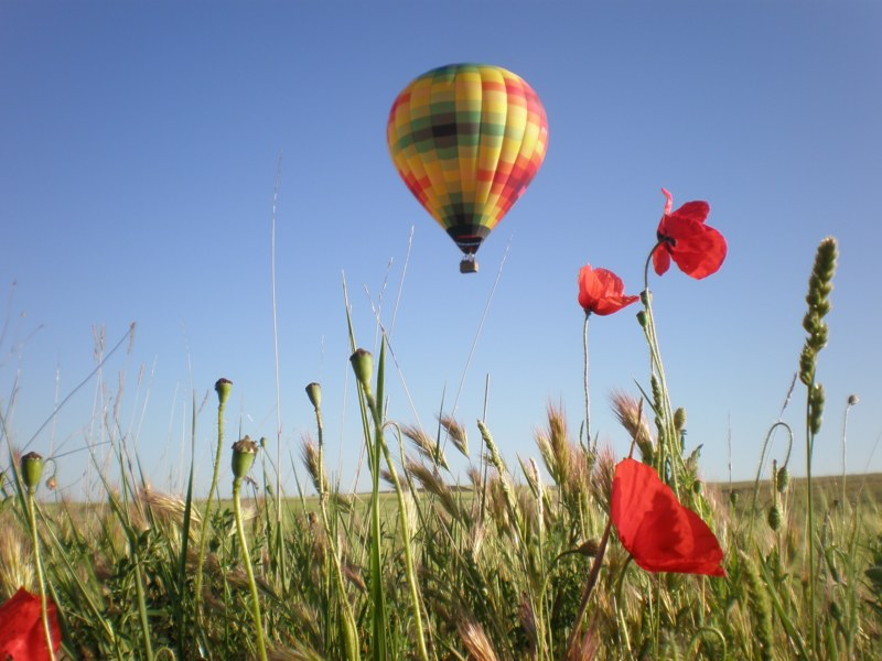 Volar en Primavera