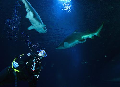 Bucear con tiburones - Valencia