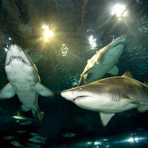 Diving with sharks in Barcelona