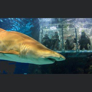 Dive with sharks in Barcelona