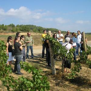 Bodega visit + wine tasting class in Guardiola de Font-Rubí (Barcelona)
