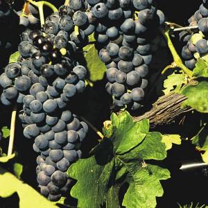 Bodega visit and Wine tasting in Plasencia (Cáceres)