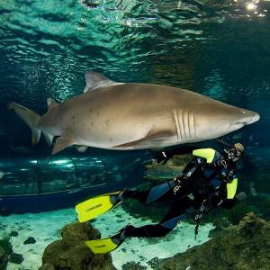 Bucear con tiburones en Barcelona