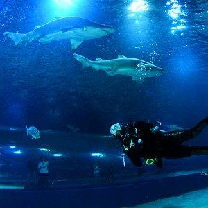 Bucear con Tiburones en Valencia