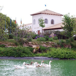 Visita premium a bodega con cata y comida en Requena (Valencia)